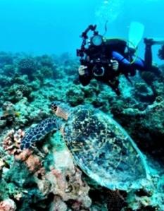 Batu Bolong Reef, NTT. eloratour