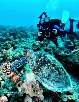Batu Bolong Reef, tempat wisata di nusa tenggara timur