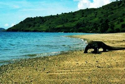 Pulau Komodo, Nusa Tenggara Timur, blog wisata indonesia