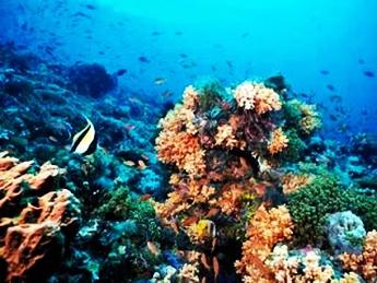 Taman Laut Selat Pantar, tempat wisata di nusa tenggara timur