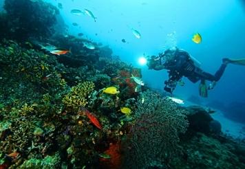 diving-di-desa-sauwandarek-papua-eloratour