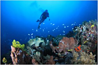 diving-di-pulau-mandena-papua-eloratour