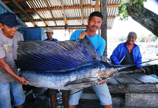 Ikan Tuhuk