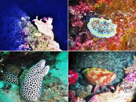 cagar alam laut pulau eno