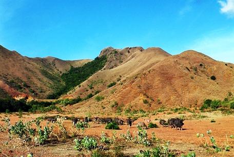 gunung kerbau di pulau moa maluku barat daya