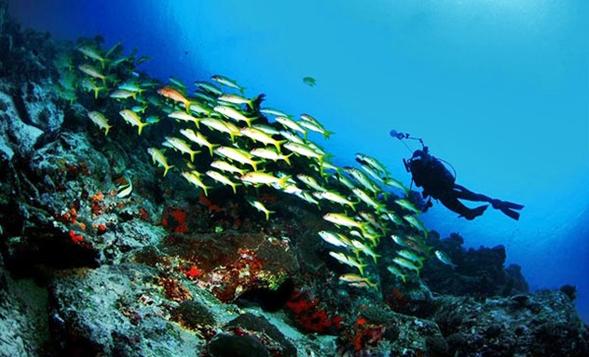 tempat wisata menawan di sulawesi utara taman laut bunaken