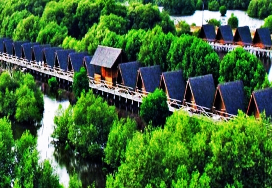 hutan mangrove di tarakan kalimantan utara