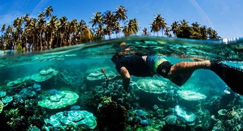 fakta unik pantai tureloto, biota lautnya menawan
