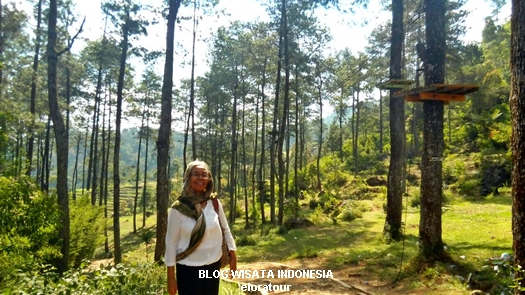hutan cemara di komplek candi gedong songo