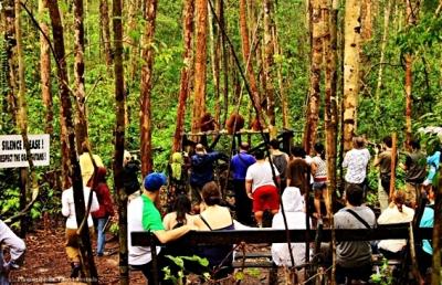 taman-nasional-tanjung-puting-blog-wisata-indonesia