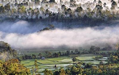 cagar-alam-morowalidi-blog-wisata-indonesia