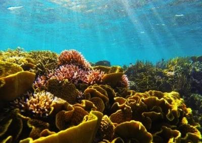 taman-laut-tumbak-blog-wisata-indonesia
