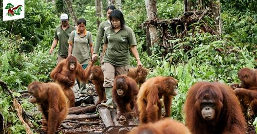 reintroduksi-orangutan-nyarumenteng-blog-wisata-indonesia-eloratour