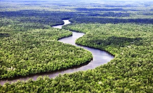 taman-nasional-sebangau-blog-wisata-indonesia-eloratour